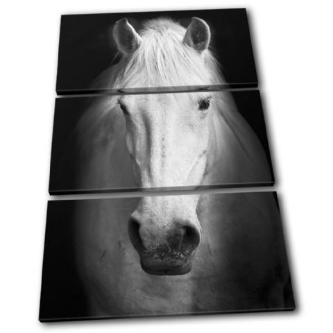 Horse Black White Animals - 13-0336(00B)-TR32-PO